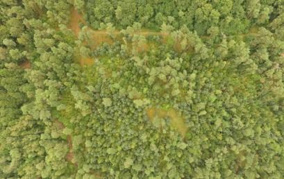 """Семинар  «Модуль """"Лес и изменение климата"""" и его составляющие»"""