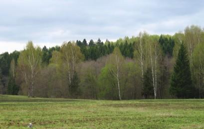 Конференция «Сохранение лесных экосистем: проблемы и пути их решения»