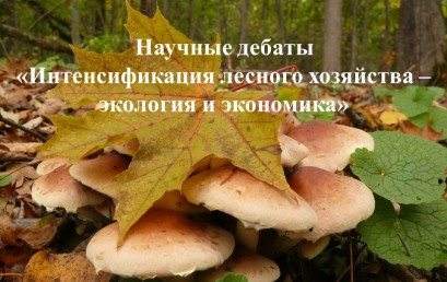 Интенсификация лесного хозяйства – экология и экономика. Стратегия развития лесного комплекса РФ