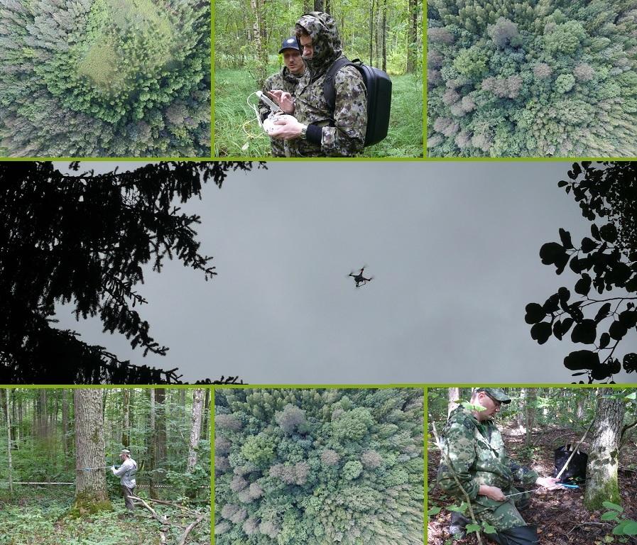 Стационарные биогеоценотические исследования в заповеднике «Брянский лес»