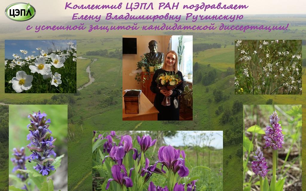 Защита кандидатской диссертации Е.В. Ручинской