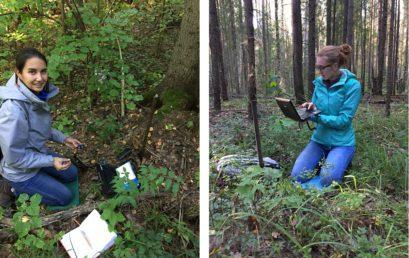Исследования ЦЭПЛ РАН в лесах Нижегородской области