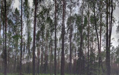 Экспедиция в Брянский лес: заложение сети регулярного мониторинга