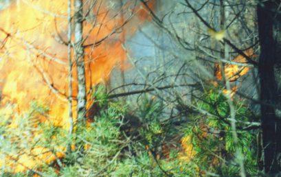 """Комментарий к статье """"Лесные пожары в сибирской тайге"""""""