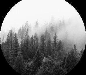 Программа научных дебатов «Оценка поглощения парниковых газов лесами: мифы и реальность»