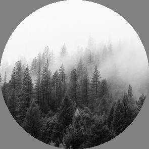 Оценка поглощения парниковых газов лесами: мифы и реальность