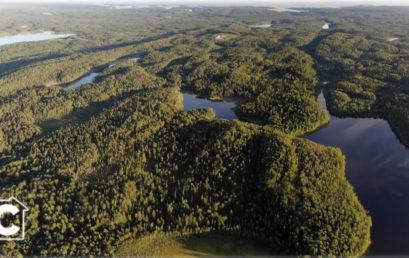 Семинар «На пути к 26 Конференции Сторон РКИК ООН: роль российских лесов и биоэкономики»