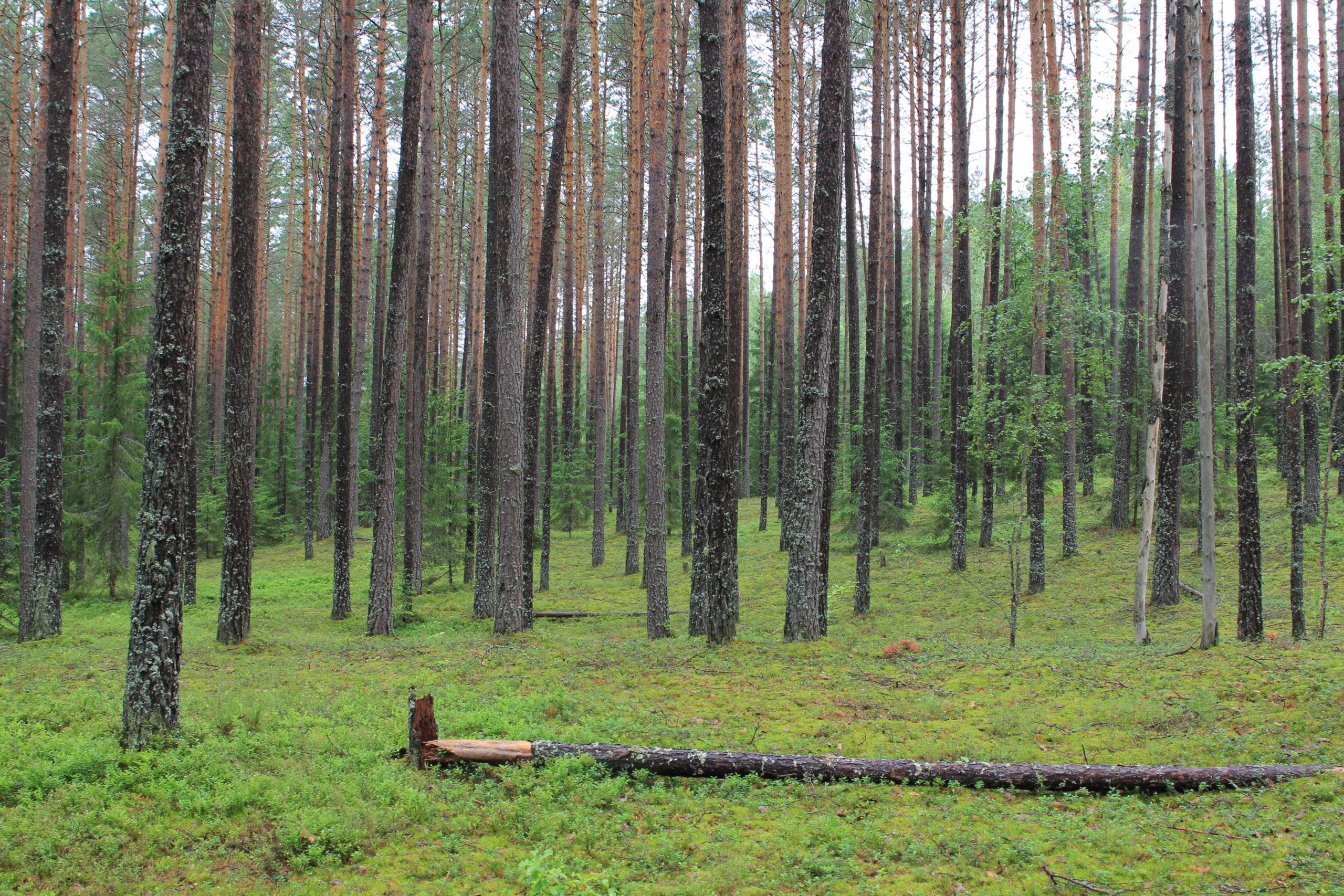Группа исследователей из геофака МГУ, ЦЭПЛ РАН и Сколтеха ищут индикаторы агрогенного этапа развития лесной территории
